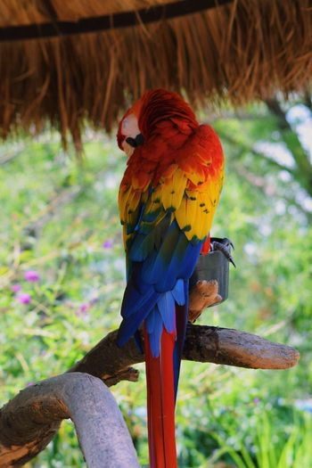 Zoo Zoophotography Bird Parrot Yellow Blue