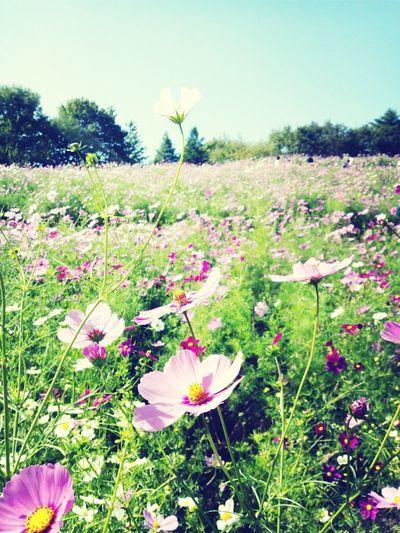 Nature Flower Beautiful