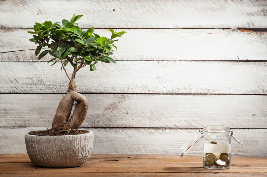 Planning Bonsai Cash Decoration Finance Flower Pot Growth Houseplant Indoors  Investment Jar Money Nature Personal Plant Potted Plant Savings Table Tree Wall - Building Feature Wood - Material