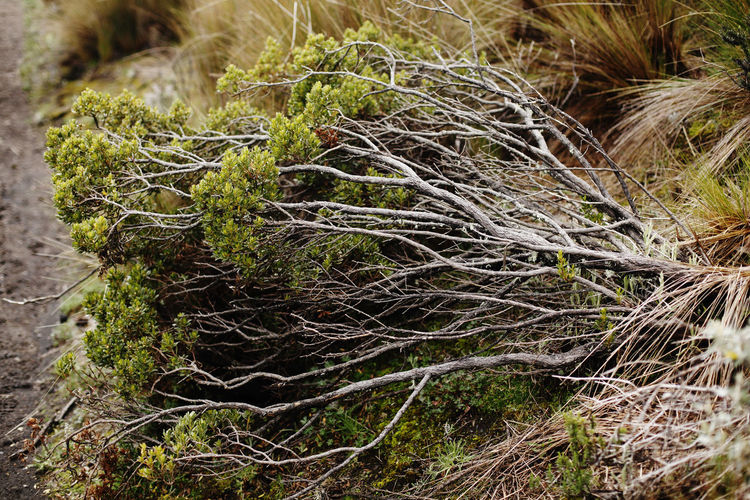 Plant Nature Growth No People Land Tree Day Close-up Root Tranquility Outdoors Grass Green Color Forest Tree Trunk Trunk Field Beauty In Nature Moss Plant Part Complexity Kotopaxi