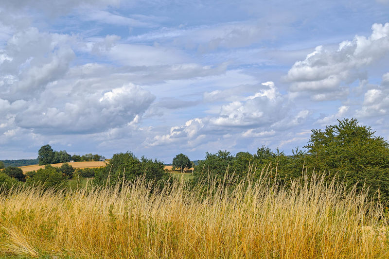 Plant Cloud - Sky Sky Landscape Field Land Growth Environment Scenics - Nature Beauty In Nature Tranquility Tree Tranquil Scene Grass Rural Scene Nature Agriculture Day No People Farm Outdoors Weite Felder Wolken