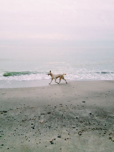 Scenics Scenics - Nature Gloomy Day Sea Side Meditation Place Running Sand Dune Sand Calm Tranquil Scene Sea Tranquility Dog Canine Mammal One Animal Land Animal Animal Themes Domestic Water Pets Beach Scenics - Nature Sand No People Domestic Animals Nature Horizon Over Water Sea