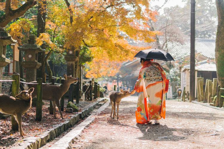 Rear view of woman feeding deer on footpath