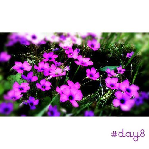 Before the rain. 100happydays Day8 Flowers Flower spring springflowers picoftheday photooftheday igersAbruzzo igersItalia igersteramo colors nature