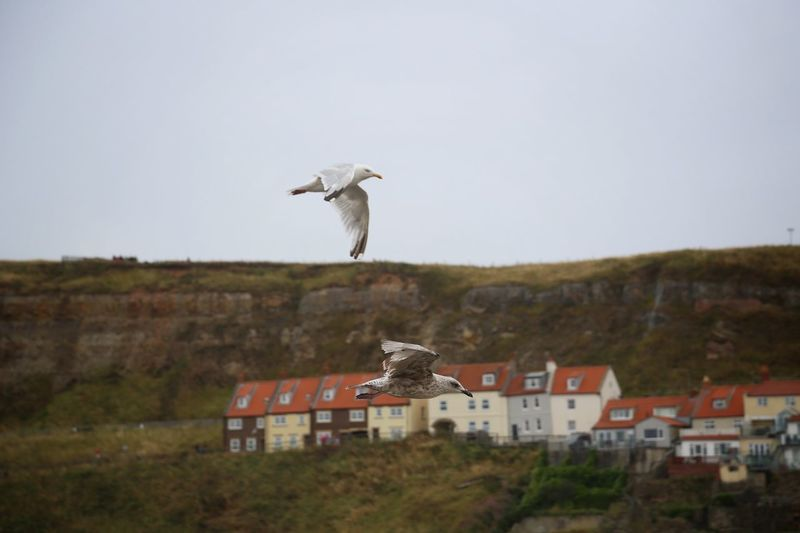 Whitby Whitby Whitby Abbey Architecture Animal Building Exterior Animal Themes Bird Built Structure Animal Wildlife Vertebrate Flying Building Animals In The Wild Day Sky Mid-air Nature No People House Motion Clear Sky Residential District Outdoors Seagull
