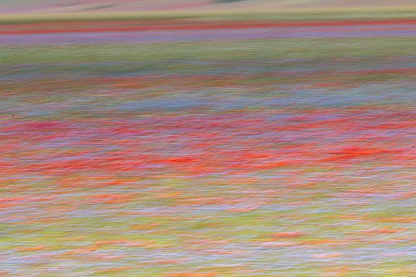 La fioritura di Castelluccio di Norcia 2018 Castelluccio Di Norcia Castelluccio Valley Colors Flowering Castelluccio Castelluccio2018 Castellucciodinorcia Colorful Lenticchie Lentil Norcia