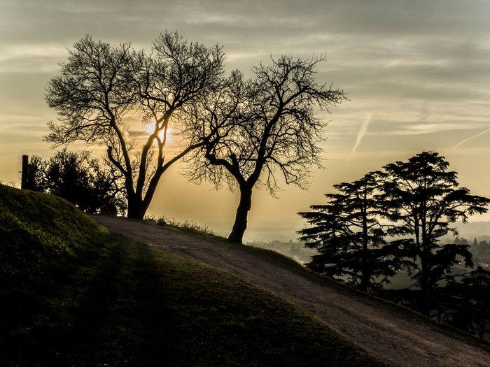 Backlights Tree