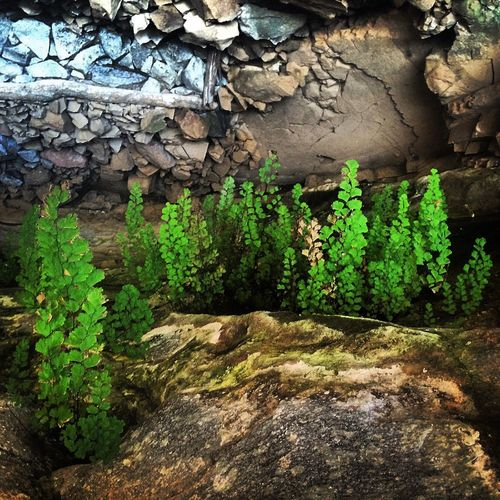 Plant Growth Rock - Object Wall - Building Feature Growing Green Color Nature Moss Rock Turn 180° Rock Formation Outdoors Day Stone Material Plant Life Green Weathered Stone Messy Beauty In Nature