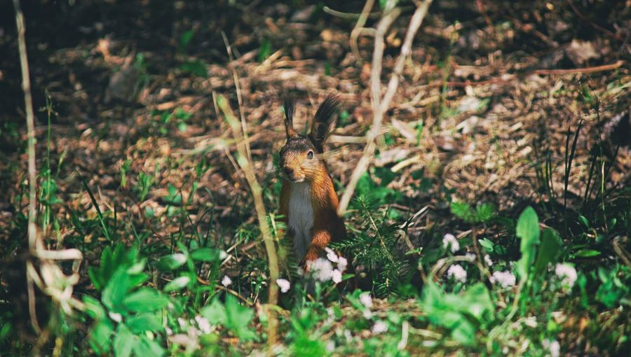 Nature Nature_collection Beauty In Nature Animals In The Wild Animal Themes Squirrel Animal Europe Reptile Grass Plant Close-up