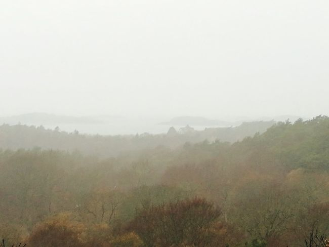 Landscape Weather Beauty In Nature Fog November