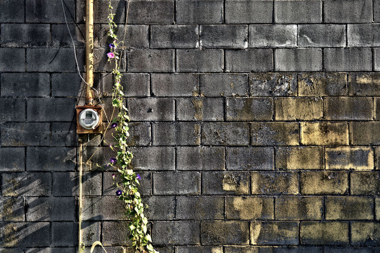 Block Building Exterior Chiped Paint Day Electric Meter Flower Footpath Fragility Full Frame No People Outdoors Plant Vintage Vintage Style