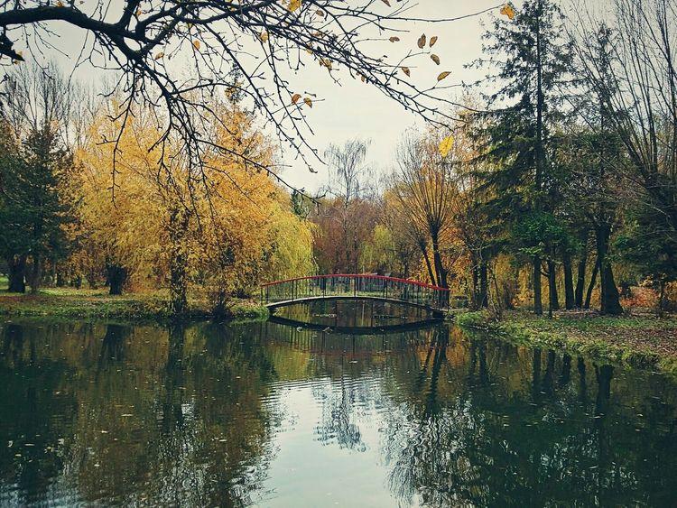 Park Autumn Pond First Eyeem Photo Samsung Galaxy A3 Ternopil Leaf Bridge EyeEm Nature Lover EyeEm Best Shots Ukraine Lake Trees Nature Forest EyeEm River Relaxing