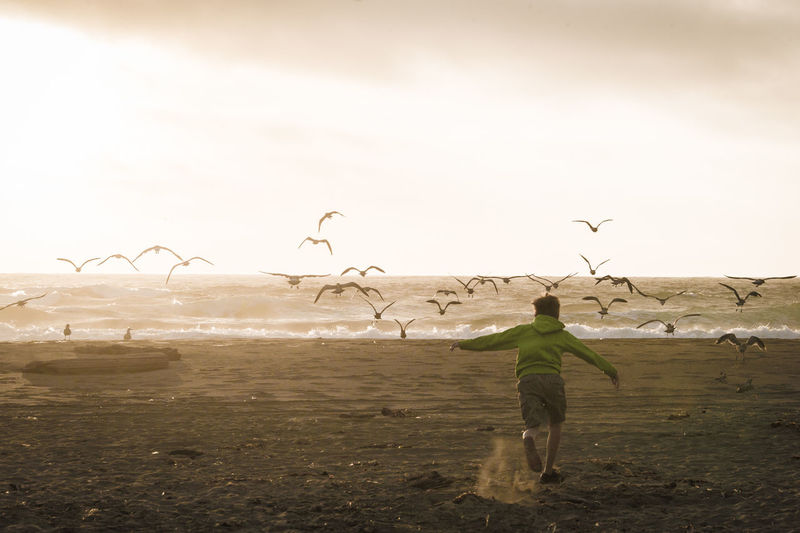 Boy chasing away birds on beach