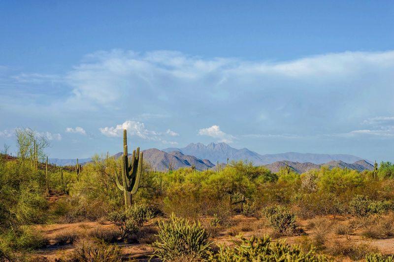 Arizona during
