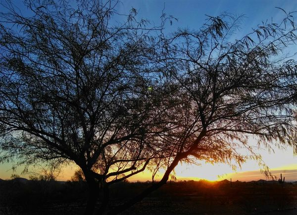 Arizona sunrise Mesquite Sunrise Tree Silhouette Sky Nature Beauty In Nature No People Sunlight Outdoors Scenics Growth Branch Day