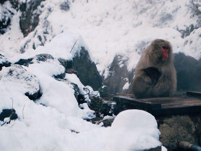 Monkey on mountain during winter