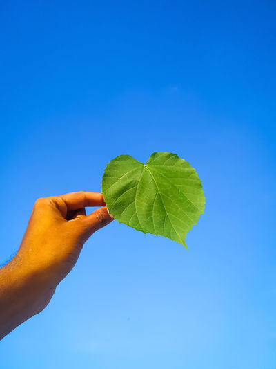 Hand holding leaves against clear blue sky