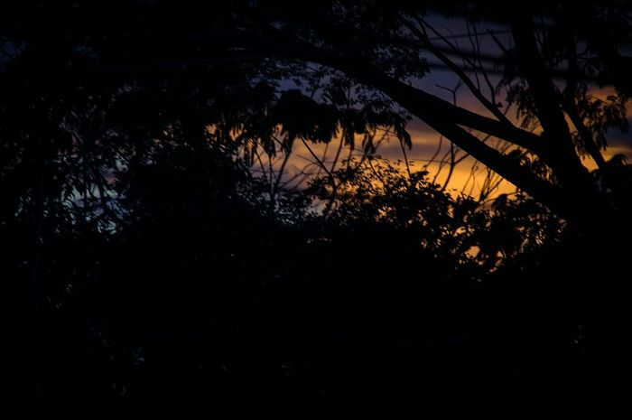 Break The Mold Tree Silhouette Nature Sunset No People Plant Night Star - Space Outdoors Beauty In Nature Sky Close-up Nikond100 Nikonphotography Nikon Photography