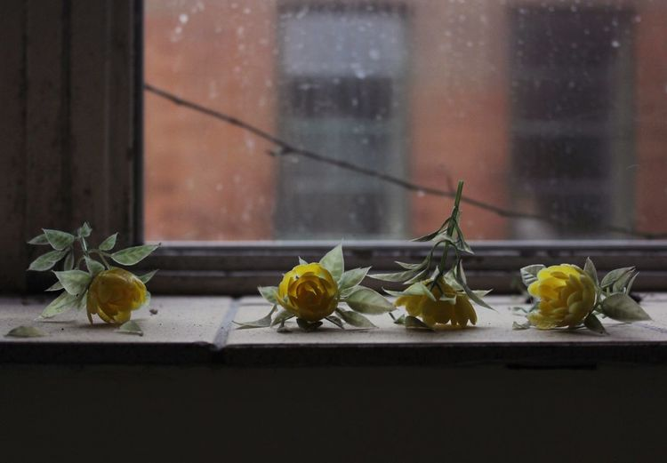 Artificial Roses By The Window