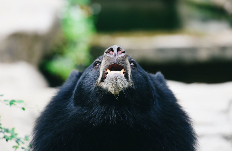 Low angle view of black bear outdoors
