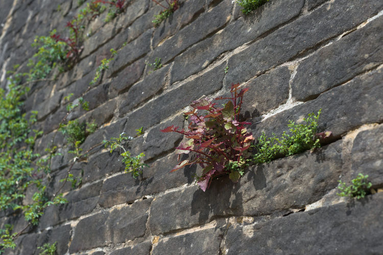 Close-up of small plant growing by wall