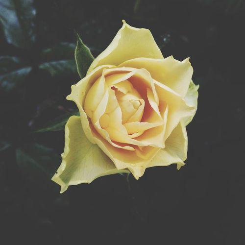 Simplicity Taking Photos Flower