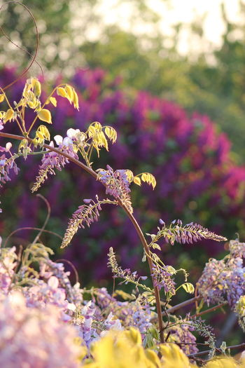 Smart City Zalaegerszeg Beauty In Nature Sunlight Day Outdoors Freshness No People Tranquility Close-up Plant Green City Sustainable Development Have A Nice Day♥ 43 Golden Moments Nature Fragility Beauty WOW Zalaegerszeg Purple Flower Lilac Syringa
