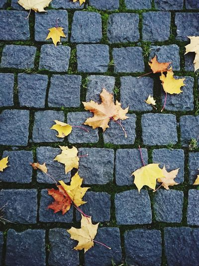 Leaf Full Frame Stone Tile Autumn Backgrounds Pattern High Angle View Cobblestone Textured  Close-up Maple Fallen Leaves Change Dry Leaf Vein EyeEmNewHere