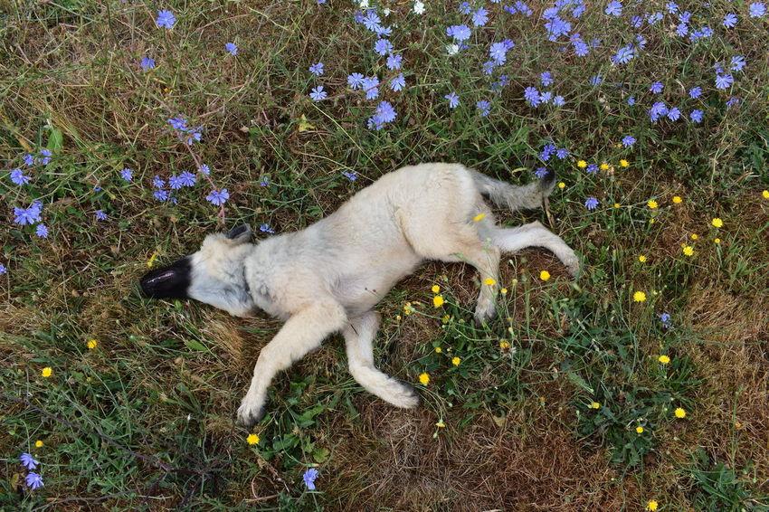 Chien Dog Fleur Bleu Fleurs Flower Flowers