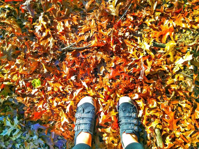 Low Section Of Person Wearing Shoes While Standing On Autumn Leaves