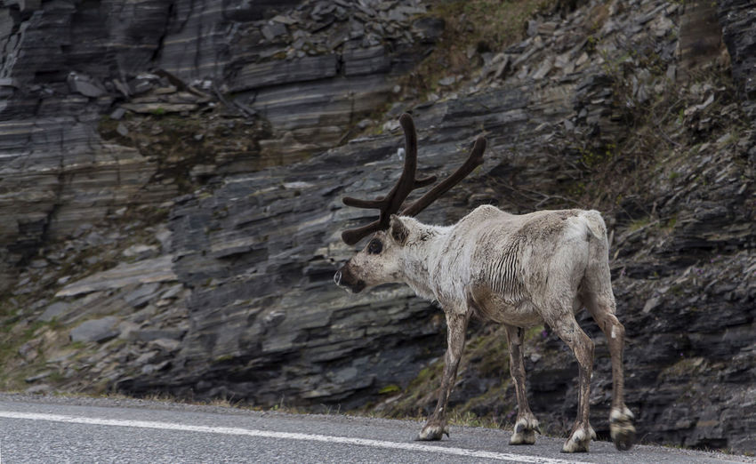 View of deer standing on rock