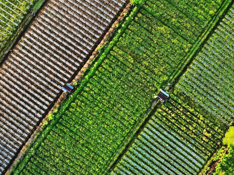 Aerial view of crops Outdoors Landscape Aerial View Aerial Photography EyeEm Selects EyeEm Gallery Eyeemphotography EyeEm Best Shots Agriculture Pattern Full Frame High Angle View Field Shadow Grass Green Color Close-up Cultivated Land Agricultural Field Crop  Plantation Plowed Field Cereal Plant Vineyard Wheat Farm Farmland Terraced Field Rice - Cereal Plant Ear Of Wheat