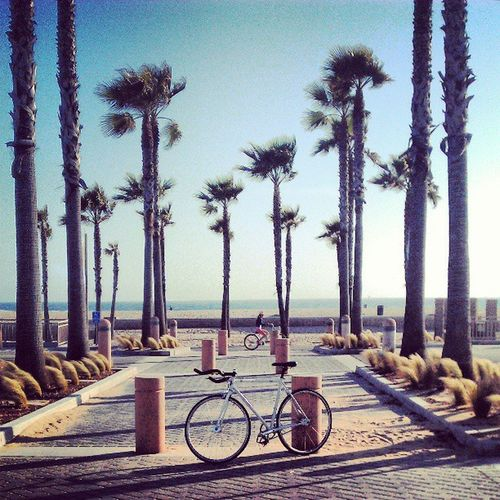 Don't Know What Else To Do. #songoftheday #thejunglegiants #bike #bikingadventure #fixie #fixedgearforlife #fixedgear #calisfinestfixies #beach #sebikes #Friday #specialized #solo #pedalfaster #sun #sweetness #awesome #fun #good #instafixie #instadaily Pedalfaster Lealpha Beach Fixedgearforlife Sun Bikeoc Fun Bikingadventure Friday Instafixie Bike Calisfinestfixies Awesome Thejunglegiants Solo Sebikes Fixie Good Fixedgear Sweetness Specialized Instadaily Songoftheday