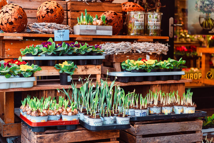 Potted plants at market