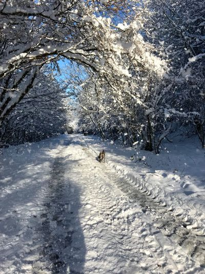 Snow ❄ Snowing Snowscene Snowed In Snowy Road Snow Day Whippet In The Snow Bright Morning