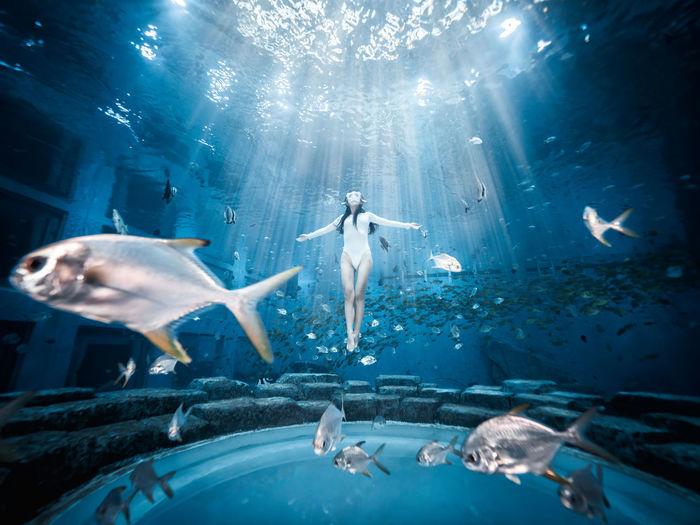 Flock of fish swimming in aquarium