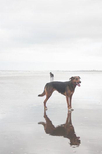 EyeEmReady Morning Light Beach Beardie Huntaway