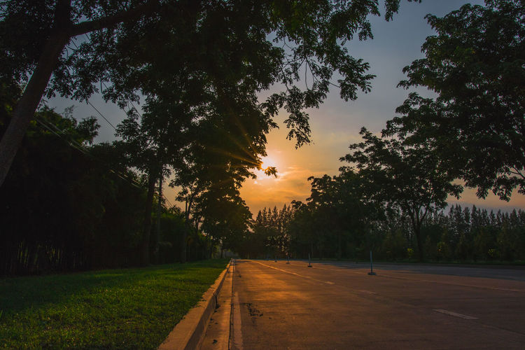 Beauty In Nature Direction Growth Lens Flare Nature No People Outdoors Plant Road Scenics - Nature Sky Sun Sunlight Sunset The Way Forward Tranquility Transportation Tree