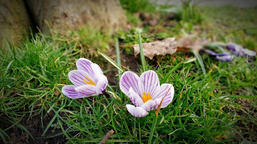 First Flowers First Eyeem Photo Spring