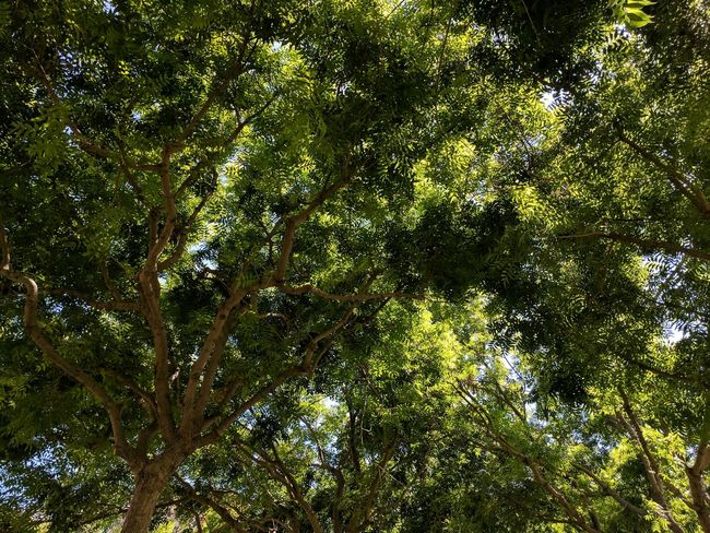 Backgrounds Full Frame Green Color Pattern No People Abstract Day Outdoors Nature Tree Close-up Sommergefühle