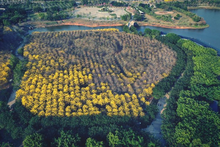High angle view of yellow flowering plants on land