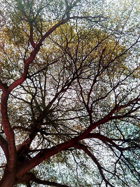 Tree Tree Photography Tree_collection  Tree Colors Colorful Tree Tree_collection  Creative Color On Leaves Creative Color Nature Photography Nature Tree View Low Angle Shot Low Angle Bangkok Thailand