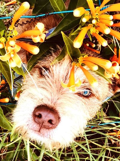 Puppy flowers garden Puppy Animal Themes One Animal Animal Pets Domestic Animals Domestic Looking At Camera Close-up Plant Portrait No People Nature Field Day