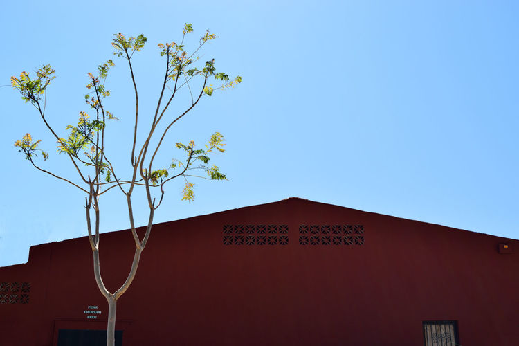 roof of the building and a tree on a background of blue sky Andalusia Architecture Blue Blue Color Blue Sky Built Structure Clear Sky Outdoors