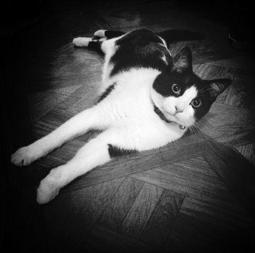 Blackandwhite Cat EyeEm Best Shots eye4photography
