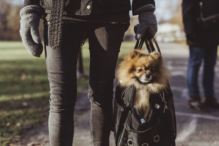 Low section of person with dog standing outdoors