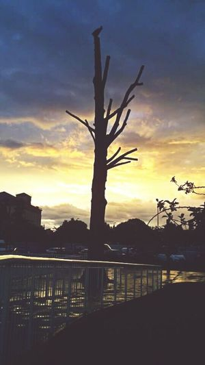 Sunset Tree Dramatic Sky Sky Landscape Scenics Nature No People Outdoors Tree Area City City Life Cigüeñas Mojado Street Beauty In Nature Landscapes Color Photography