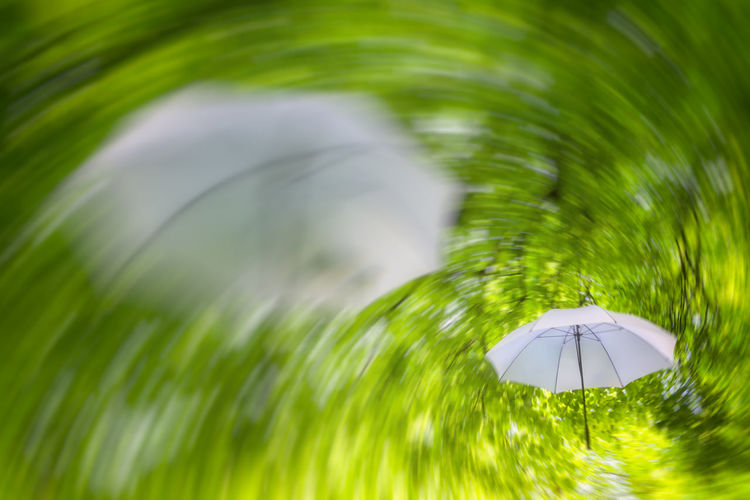 Scarcely opened their eyes, they are already the delicate moments of the dream. Kaum die Augen aufgeschlagen so sind sie schon dahin die zarten Momente des Traumes. Abstract, Tree, Tree, Leaves, Awaken, Fichtner Fotodesign, Fotomarf, Speed, Green, Umbrella, Umbrella, Summer, Parasol, Stripes, Surrealism, Dream, Visualization, Wind, Vortex Beauty In Nature Close-up Day Golf Course Grass Green Color Leaf Nature No People Outdoors Tree