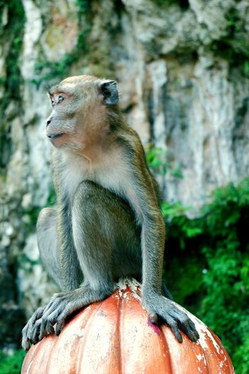 Close-up of monkey sitting on bollard