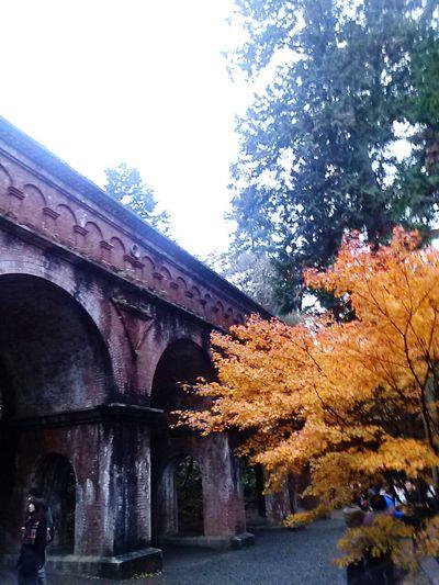 Japan Japanese Temple Kyoto Autumn Colors Autumn Leaves Autumn 南禅寺 水路閣 Nanzen-ji